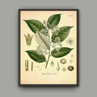 Canvas Print Vintage Home Decor Wall Art Pictures Botanical Green Plant Coffe