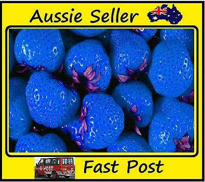300Pcs  Strawberry Seeds Deep Blue Strawberries Easy Grow Garden And Plant Pots