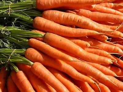 "Carrot Seeds ""All Season"" (Approx 300 Seeds) Excellent Variety"
