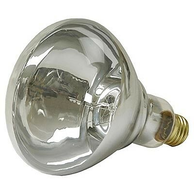 HEAT LAMP BULB Brass Base Threaded Glass Poultry Brooders Animal Rearing 250W