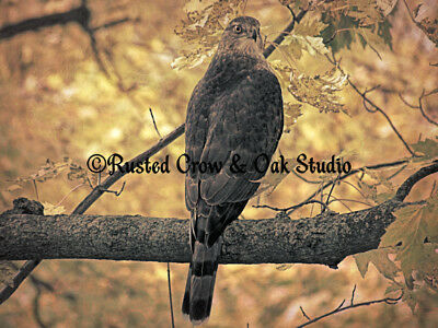 Hawk Bird on Branch Gold Brown Leaves Home Decor Wall Art Matted Picture A134