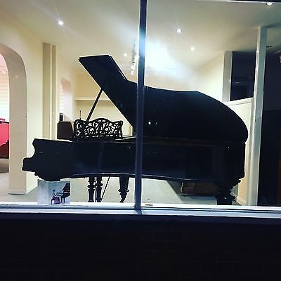 Bechstein Model V Grand. Fully reconditioned - 5 yr guarantee