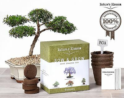 Grow 4 Bonsai Trees with Nature's Blossom Growing Kit. Soil Pots and Tree See...