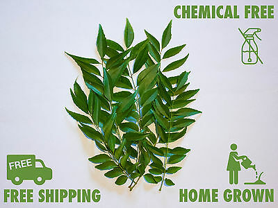 Fresh Curry Leaves 10g