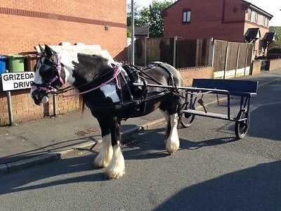 Horse Harness And Cart