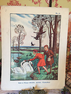 Enid Blyton School Poster Vintage Nature Print Birds in Winter Raymond Sheppard