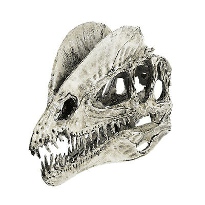 1/3 Scale Dinosaur Skull Dilophosaurus Skeleton Model Drawing Prop White
