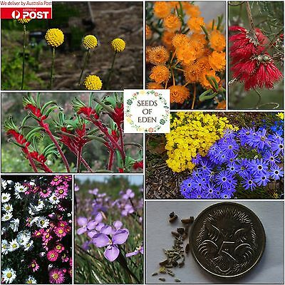 20 AUSTRALIAN NATIVE FLOWER MIX SEEDS; Beautiful different variety flowers