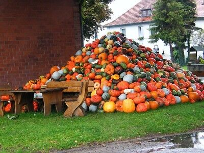 Pumpkin  50 MIXED HEIRLOOM SEEDS-ALL SHAPES & SIZES-8+ VARIETIES-ALL GOOD EATERS