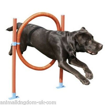 Rosewood Dog Agility Range - Hoop Jump - Great Fun For Dogs And Owners