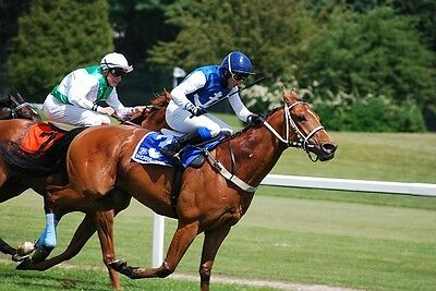 @@@ MAKE EASY CASH EVERY DAY With The Amazing EASY-STEPS Horse Racing System @@@