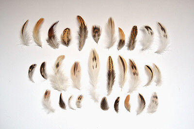 30 Natural Black Brown Cream White Feathers Bird Small Mixed Spotted Tan 3-10cm