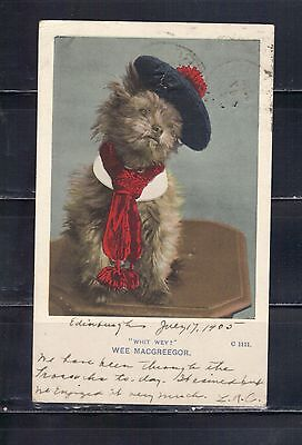 LJL Stamps: 1905 Wee Macgreegor Cat Post Card with stamp, Lot 88
