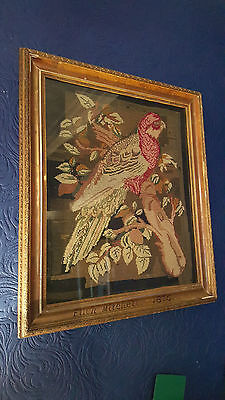 Antique Victorian Needlepoint Sampler, Tapestry, A Parrot, Signed & in Frame