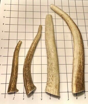 One Organic Elk Deer Antler Dog Chew Small Medium Large XL XXL