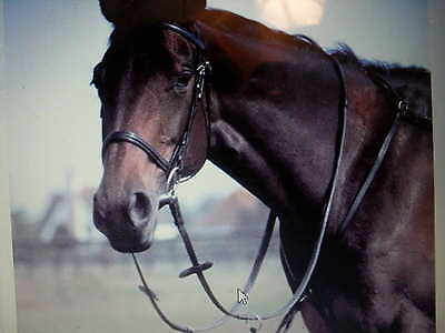 Windsor Leather Breastplate/ Detachable Martingale Pony,Cob Full,Posted next day