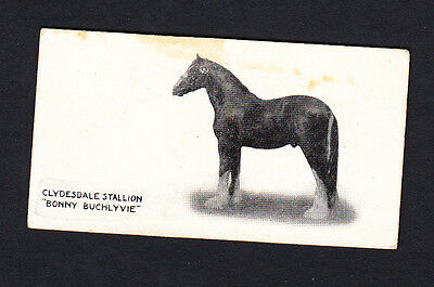 """Taddy Famous Horses and Cattle Clydesdale Stallion """"Bonny Buchlyvie"""" #49"""