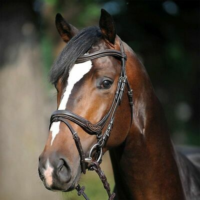 Kavalkade Ivy Anatomical Flash Snaffle Bridle, Incl Super-Grip Continental Reins
