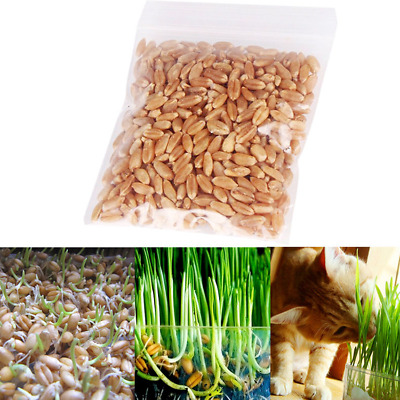 30g/pack 100% Pure Natural Grown Sweet Cat Grass Seed Cat Pet New CA