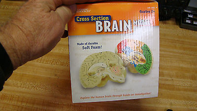 NEW Learning Resources Cross-section Brain Model - NEW LER 1903