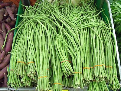 5g (appr. 30) yard long green bean seeds SPAGHETTI Snake Bean, Chinese Long Bean