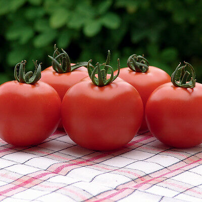 Fresh Certified seeds  Tomato Orkado F1 - 15 Seeds  Outdoor growing