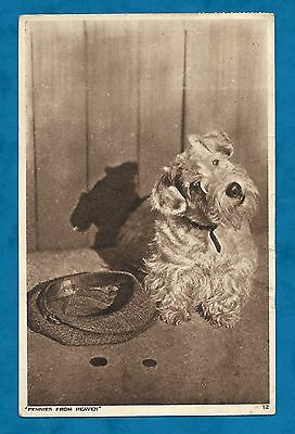 "1947 Pc Sealyham Dog Next To Cap And Coins - ""pennies From Heaven"""
