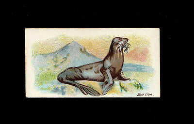 "B.a.t 1903 Superb ( Animal ) Type Card "" Sea Lion -- Wild Animals Of The World """