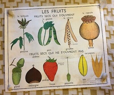 French Vintage School Poster Fruit Plants