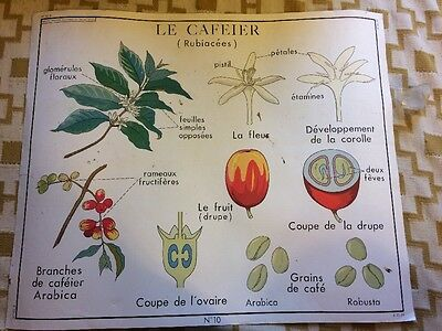 Vintage French School Poster Coffee / Cafe