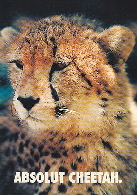 1 Postkarte - Absolut Cheetah - Absolut Gepard - Absolut Vodka - Waterkant-Card