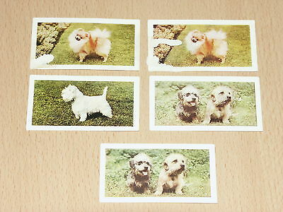 Hornimans Tea Cards DOGS