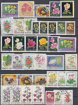 YS-B699 FLOWERS - Hungary, Nature, Plants, Roses, Insects Used