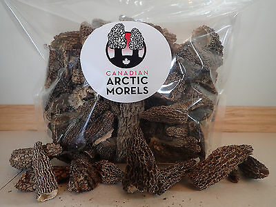 Premium Grade Dried Morel Mushrooms *ON SALE* 1 Dry Pound