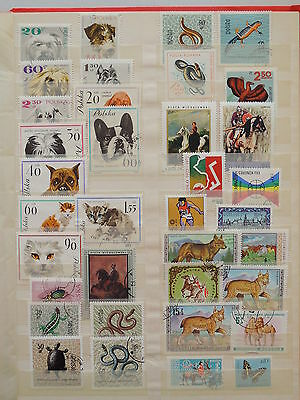 YS-L959 POLAND - Reptiles, Dogs, Cats, Wild Animals USED