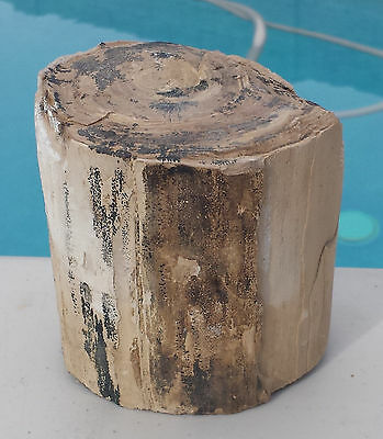 Petrified Wood Log - From NV - Natural - (PW-MFR443)