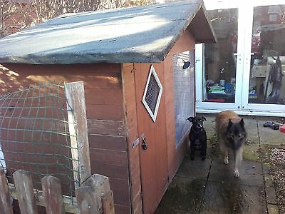 dog kennel and run 8 x 4