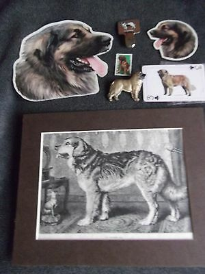 Leonberger - 6 Items - Picture-Badge-Ring Clip-Stickers-Stamp-Card