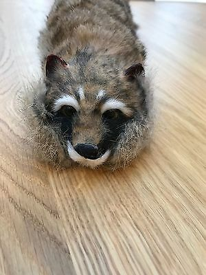Children's Entertainers Spring Puppet Rocky the Raccoon