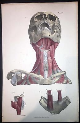 1836 Large Antique Print - MUSCLES MEDICAL ANATOMY BODY BONES LIGAMENTS  (10)