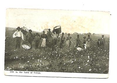 1896  In The Land Of Cotton Usa ...vintage Postcard