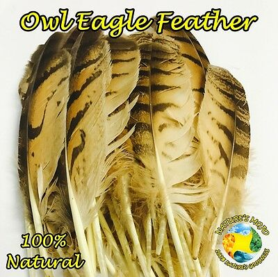 Feathers of Natural Owl Eagle Feather - Pack of 5