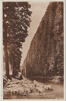 Early Postcard -Meikleour - Beech Hedge - Perthshire  - Real Photo