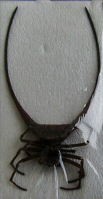 Odd Spiny Orb Spider Gasteracantha arcuata FAST SHIP FROM USA