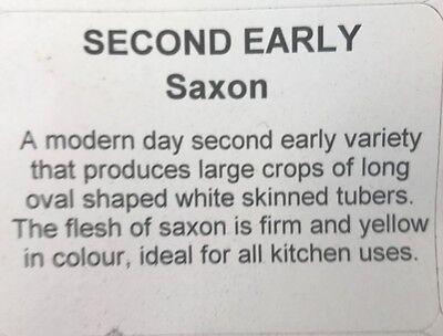 Premium 2017 SAXON Second Early Seed Potatoes pack of 5 or 10