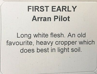 Premium 2017 ARRAN PILOT First Early Seed Potatoes pack of 5 or 10