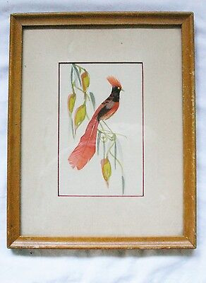 Vintage real Feather Art Bird water color framed