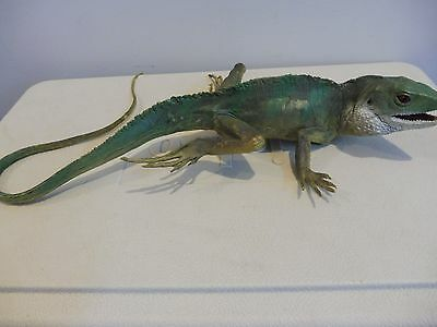 """IGUANA - CE hard rubber figurine 24"""" long with tail staightened"""