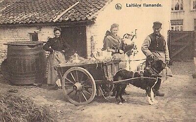 Laitiere Flamande Dog Milk Cart - Belgium - Litho - Unused - Very Good