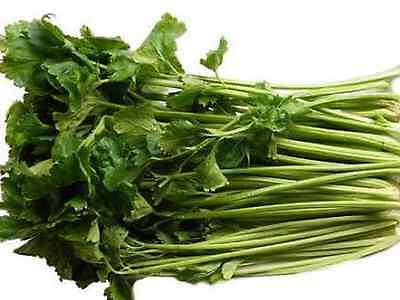 "Celery Seeds ""CHINESE"" (Approx 300 Seeds) Excellent variety"
